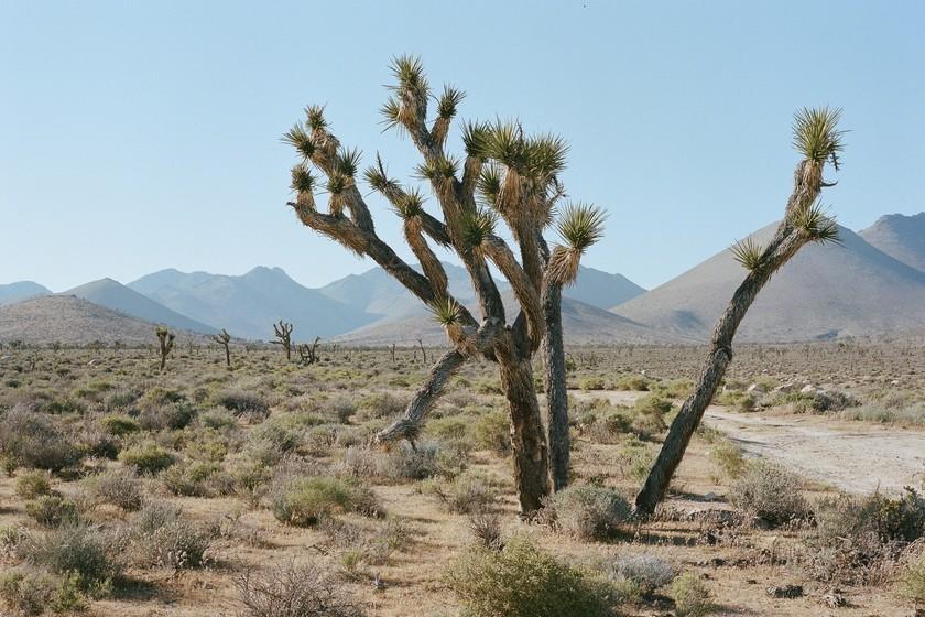 Death Valley (California) registra 54,4 °C, de confirmarse va a ser el récord de temperatura más alta registrada nunca en el planeta